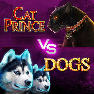 CatPrince-VS-Dogs_403x403
