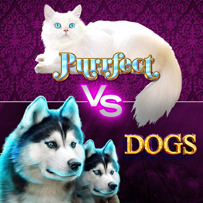 Puurfect-VS-Dogs_403x403